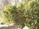 Gärten_2.jpg