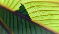 grüne Welle k.jpg