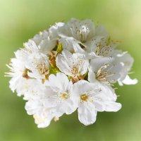 Baumblüte_2.jpg