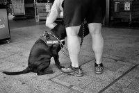 Hundefreunde (2).jpg