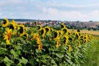 a_Sonnenblumen.jpg
