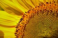 f_Insekten.jpg