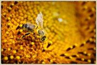 g_Insekten.jpg