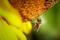 h_Insekten.jpg